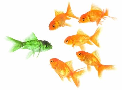green goldfish small (425x313)